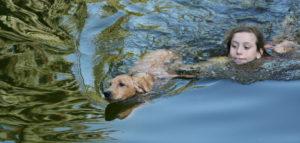 Labrador Retriever gelb schwimmen